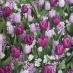 tulipa-dynamic-change-reg-9007
