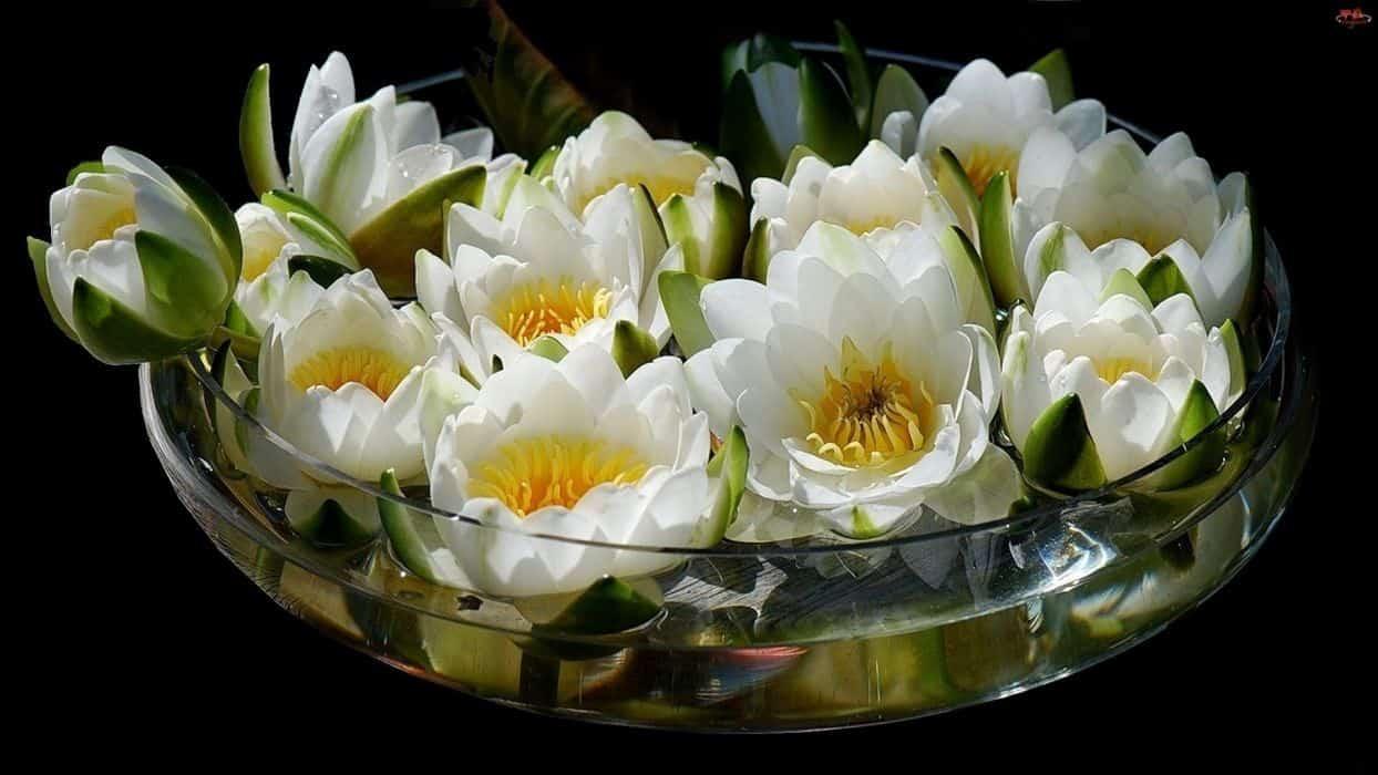 Tavirózsa és lótusz, mint vágott virág
