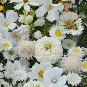 Egynyári virág mix – fehér színben – 5 gr