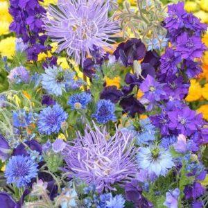Egynyári virág mix – kék árnyalatokban – 5 gr