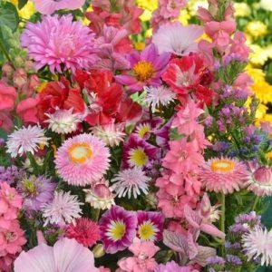 Egynyári virág mix – rózsaszín árnyalatokban – 5 gr