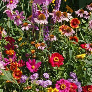 Pillangós rét egynyári virág mix – 5 gr